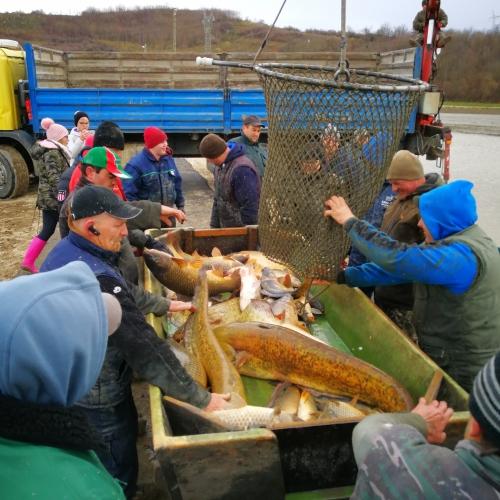Bérhalászat bonnyapuszta