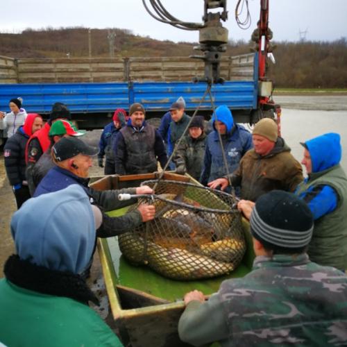 bérhalászat bonnya