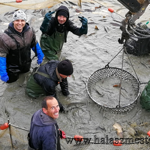 Halász brigád