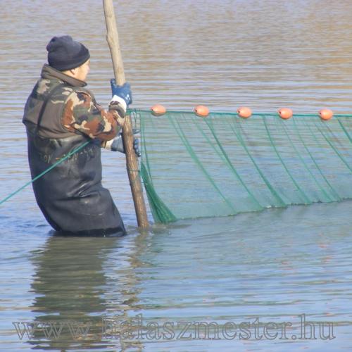 Halászat vezesd a fát